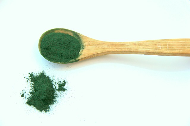 Zelená řasa